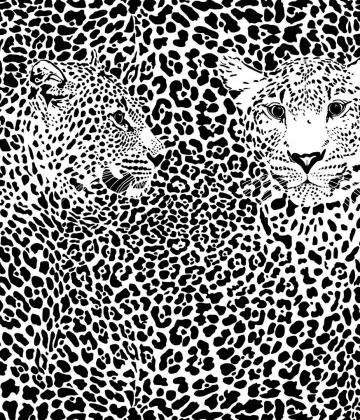 Black and White Leopards