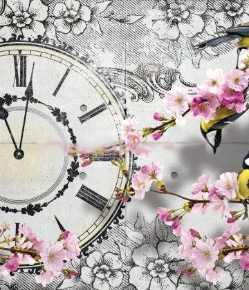 Clock Orchid